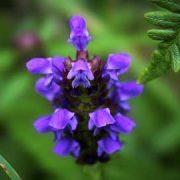 elixirs floraux Paris brunoy Johanna Dermi