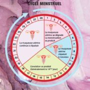 les 4 phases du cycle féminin - Johanna Dermi